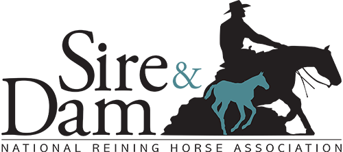 Stallion Auctions